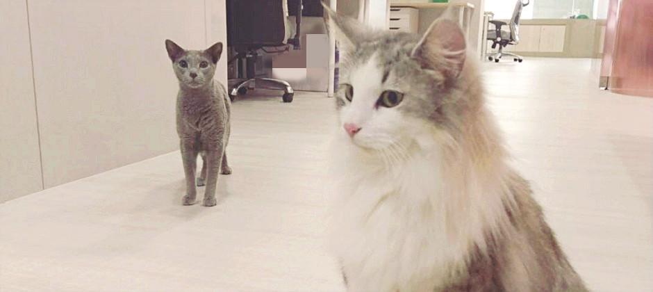 辦公室有貓咪陪你上下班