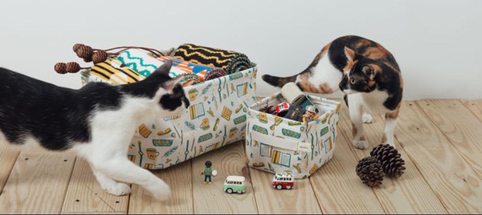 隱藏的兩位貓老闆:花椒&花豆